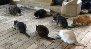 Feral cats being fed by SNAPPS