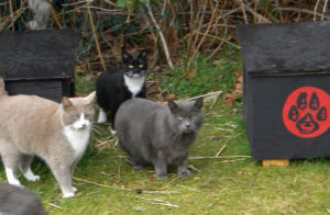 Feral cat colony cared for by SNAPPS