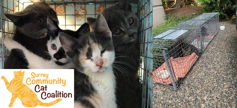 Surrey Community Cat Coalition: $5,750