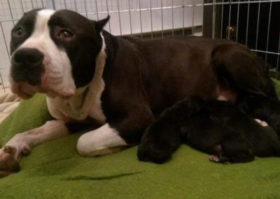 A rescued pit bull mom and her pups at that the grant assisted.