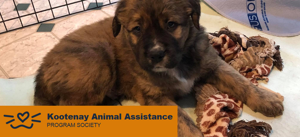Kootenay Animal Assistance Program Society (KAAP): $2,000